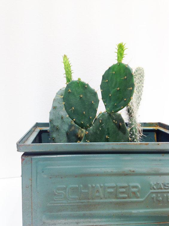 cactus in ijzeren bak.jpg